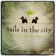 Doggie PJs – Tails in the City